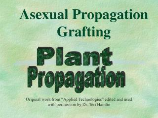 Asexual Propagation Grafting
