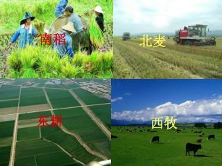 第一节 农业的区位选择