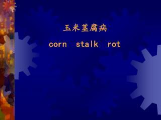 玉米茎腐病   corn  stalk  rot