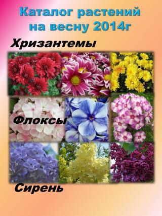 Каталог растений на весну 2014г