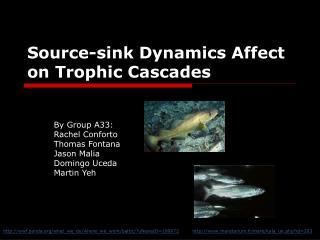 Source-sink Dynamics Affect on Trophic Cascades