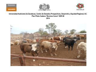 "Proyecto Estratégico Territorial ""Cadena Bovinos Carne""  Plan Piloto 2014 Antecedentes"