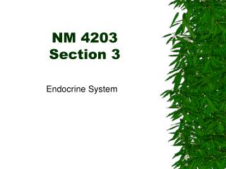 NM 4203  Section 3