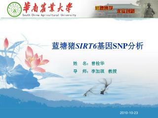 蓝塘猪 SIRT6 基因 SNP 分析