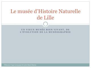 Le musée d'Histoire Naturelle de Lille