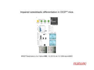 MHGP Raaijmakers  et al.  Nature 000 ,  1 - 6  (2010) doi:10.1038/nature08 851