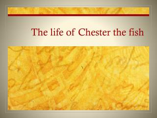 The life of Chester the fish