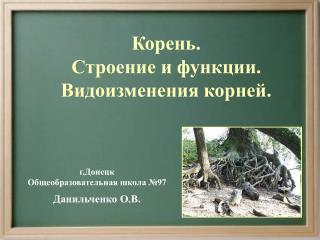 Корень.  Строение и функции. Видоизменения корней.