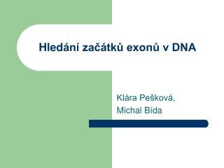 Hled ání začátků exonů v DNA