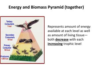 Energy and Biomass Pyramid (together)