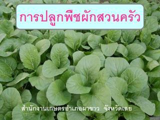 การปลูกพืชผักสวนครัว