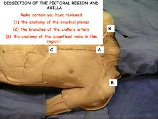 DISSECTION OF THE PECTORAL REGION AND AXILLA Make certain you have reviewed