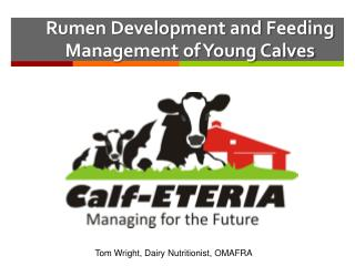 Rumen Development and Feeding Management of Young Calves