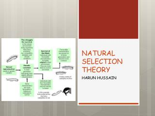 NATURAL SELECTION THEORY