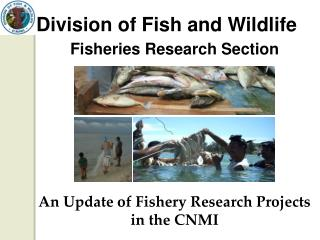 Division of Fish and Wildlife