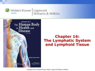 Chapter 16: The Lymphatic System and Lymphoid Tissue