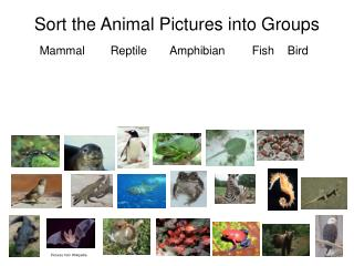 Sort the Animal Pictures into Groups