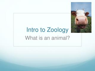 Intro to Zoology