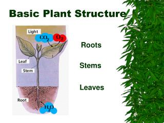 Basic Plant Structure
