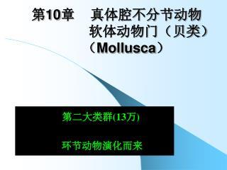 第 10 章    真体腔不分节动物                   软体动物门(贝类)      ( Mollusca )