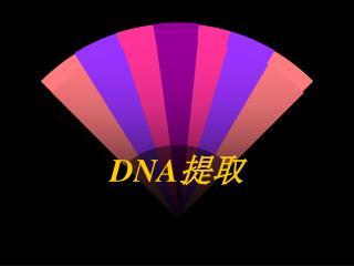DNA 提取