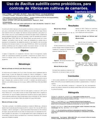 Uso do  Bacillus subtillis  como probióticos, para controle de  Vibrios  em cultivos de camarões.