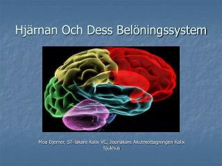 Hjärnan Och Dess Belöningssystem