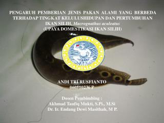 ANDI TRI RUSFIANTO 060510236 P Dosen Pembimbing :