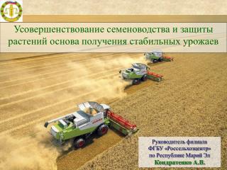 Усовершенствование семеноводства и защиты растений основа получения стабильных урожаев