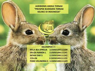 """AGRIBISNIS ANEKA TERNAK """" PROSPEK  BUDIDAYA TERNAK KELINCI DI INDONESIA"""""""