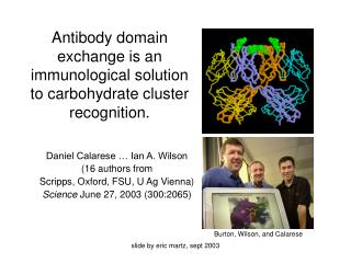 Antibody domain exchange is an immunological solution to carbohydrate cluster recognition.