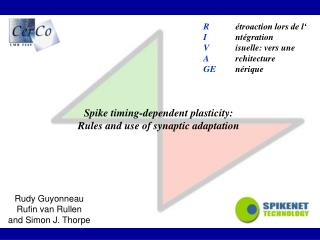 Spike timing-dependent plasticity: Rules and use of synaptic adaptation