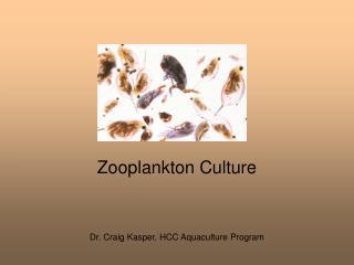 Zooplankton Culture