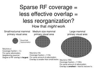 Sparse RF coverage =  less effective overlap =  less reorganization? How that  might  work