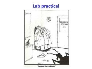 Lab practical