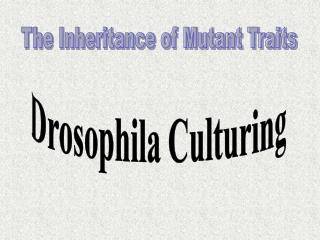 The Inheritance of Mutant Traits