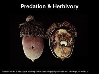 Predation &  Herbivory