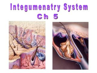 Integumenatry System