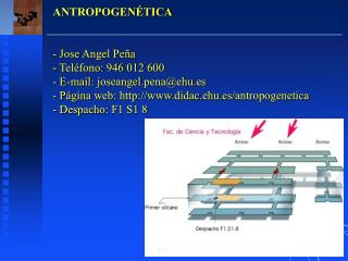 ANTROPOGENÉTICA - Jose Angel Peña   Teléfono: 946 012 600  E-mail: joseangel.pena@ehu.es