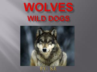 Wolves Wild Dogs