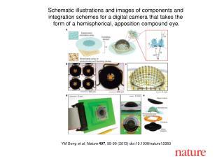 YM Song  et al. Nature 497 , 95-99 (2013) doi:10.1038/nature12083