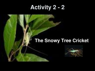 Activity 2 - 2