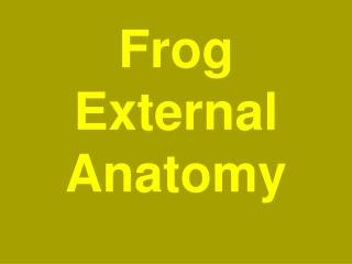 Frog External Anatomy