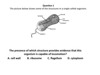 Question 1  The picture below shows some of the structures in a single-celled organism.