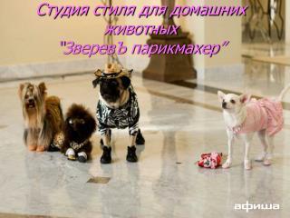 """Студия стиля для домашних животных  """" ЗверевЪ парикмахер """""""