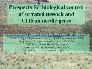 Prospects for biological control of serrated tussock and Chilean needle grass