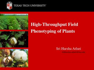 High-Throughput Field Phenotyping of Plants
