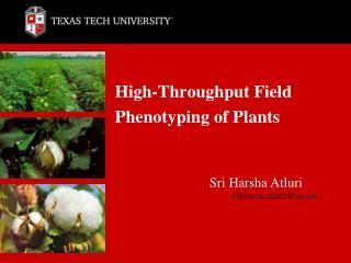 High-Throughput Field Phenotyping of Plants