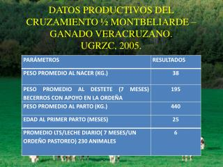 DATOS  PRODUCTIVOS DEL CRUZAMIENTO ½ MONTBELIARDE – GANADO VERACRUZANO. UGRZC, 2005.