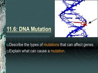 11.6: DNA Mutation